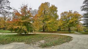 Herbst im Park 2