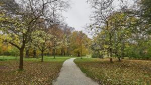 Herbst im Park 1
