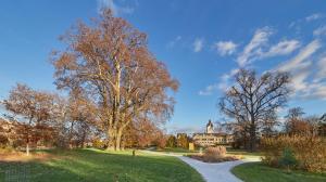 Park Grafenegg Schloss Herbst