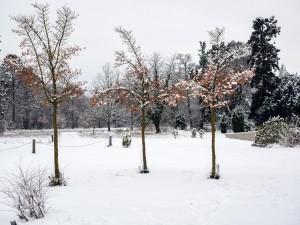 Winter Park Grafenegg 6
