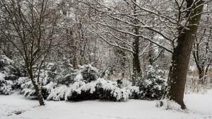 Winter Park Grafenegg 13