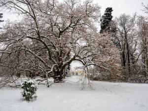 Winter Park Grafenegg 9