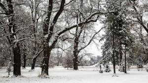 Winter Park Grafenegg 7