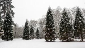 Winter Park Grafenegg 5