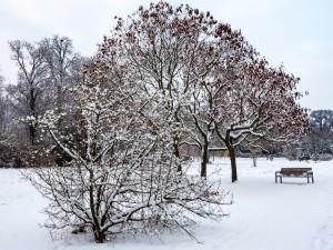 Winter Park Grafenegg 4
