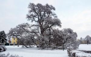 Winter Park Grafenegg 2