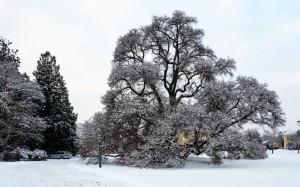 Winter Park Grafenegg 1