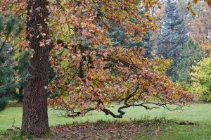 Herbst im Park 3