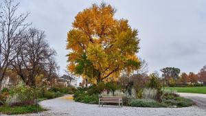 Grafenegg Herbst 2020 im Park  1