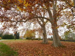 Grafenegg Herbst 2020 im Park 2