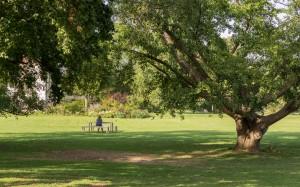 Wiese im Park Grafenegg