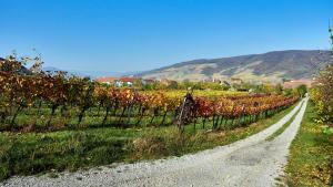 Weingärten Weg Mautern 2