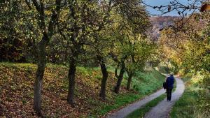 Weg Weingärten Mautern 2