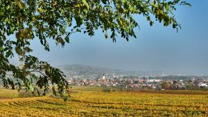 Blick auf Mautern von den Weingärten