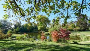 Grafenegg Herbst im Park Teich 2
