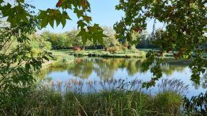 Grafenegg Herbst im Park Teich 4