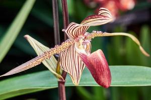 P2190178  Orchideen