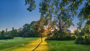 Grafenegg Herbst im Park Sonnenuntergang  1