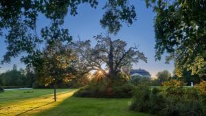 Grafenegg Herbst im Park Sonnenuntergang 3