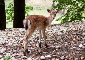 Tierpark Haag 7