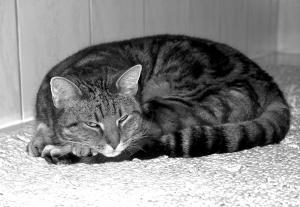 Katze SW - Aufnahme
