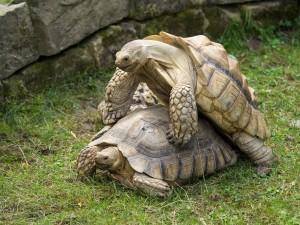 Schildkröten Tierpark Herberstein