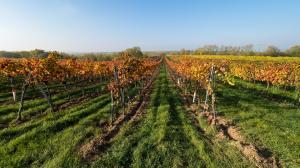 Herbstlaub Weingärten 8