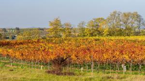 Herbstlaub Weingärten 9