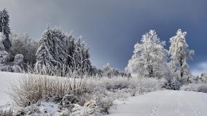 Harbach Winter 2021