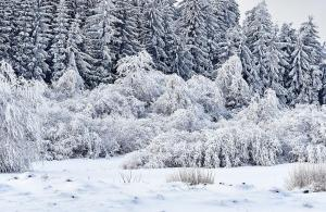 Waldviertel Harbach Winter 2021
