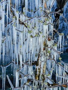Frost Eis Obstplantage Brunn im Felde 4