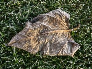 Winter Frost Garten Raureif (3 von 3)